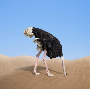 http://www.dreamstime.com/royalty-free-stock-image-scared-ostrich-burying-its-head-sand-concept-image44635526